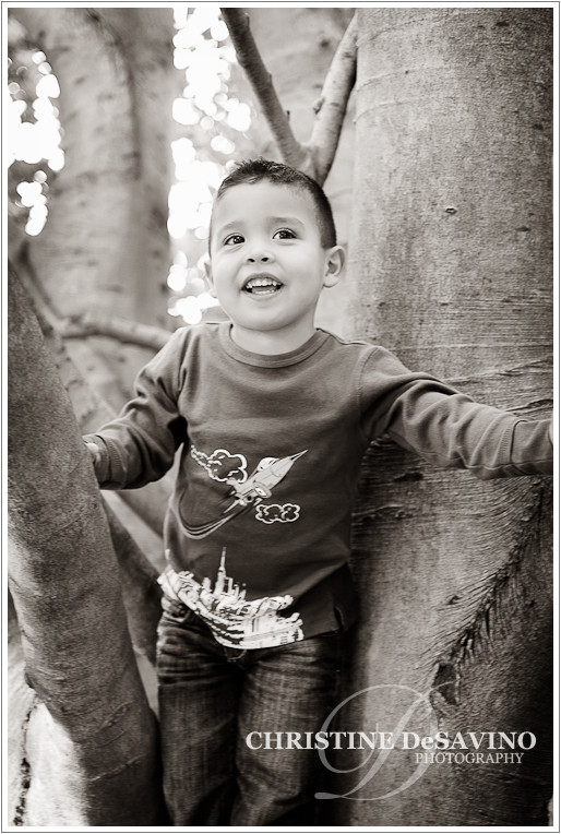 Black and white of young boy in a tree - NJ Children's Photographer